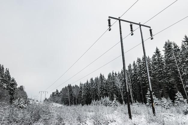 冬のモミの木と電柱のグレースケールショット