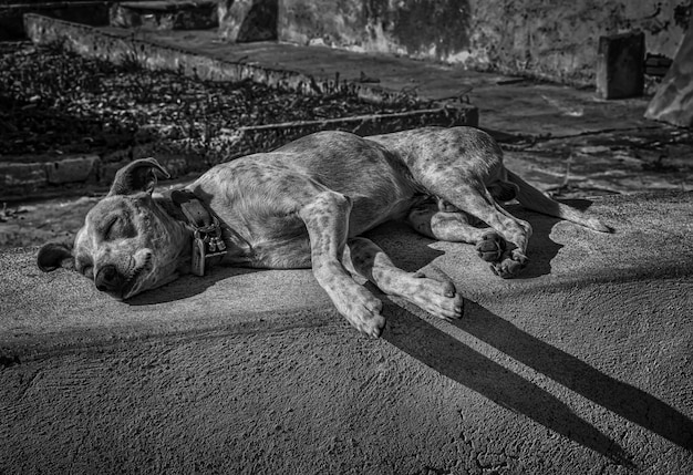 Greyscale shot of a tired homeless cute dog sleeping on the street in the afternoon