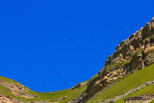 The griffon vulture (gyps fulvus) flies in the sky over the mountains in the north caucasus in russia