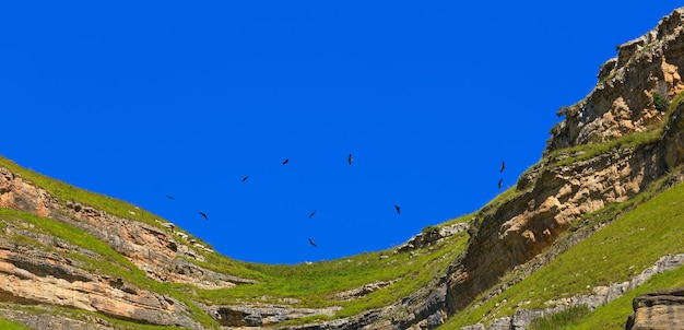 The griffon vulture (gyps fulvus) flies in the sky over the mountains in the north caucasus in russia.