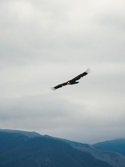 山の上の空を飛んでいるグリフォンハゲタカgypsfulvus、垂直ビュー。