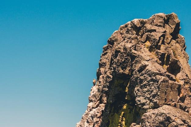 Белоголовый сип на скале в национальном парке монфраг