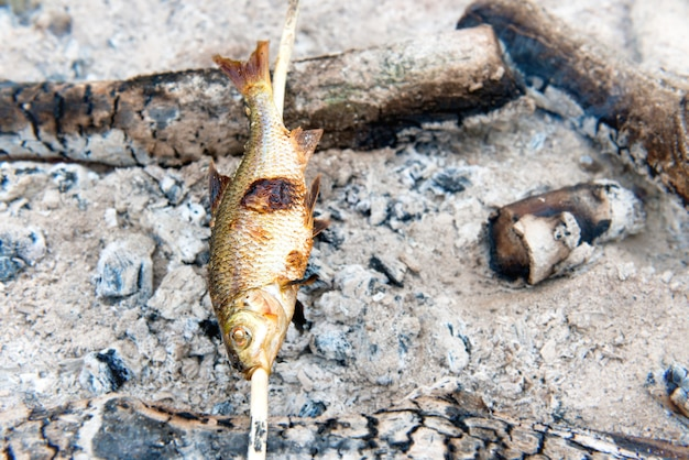 Рыба-гриль с палкой на огне