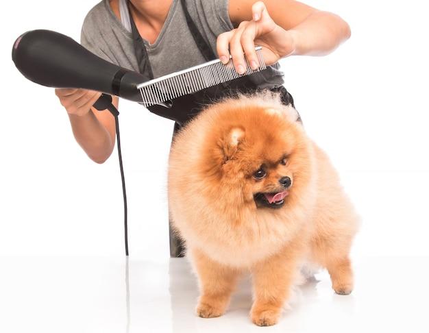 Groom a dog