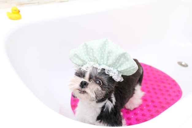 Grooming. bathing the dog in the shower. wet dog bathes. pet care. shower cap
