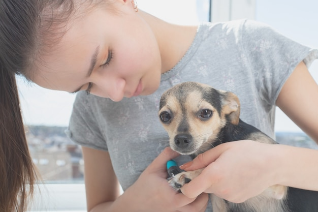 Grooming the claws of a dog. prevention of infections on the legs of an animal