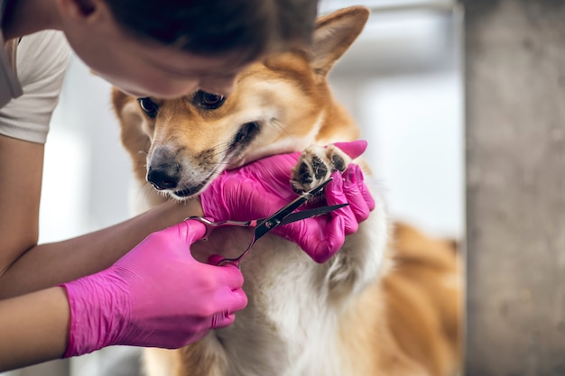 Уход. грумер женщина работает в салоне груминга домашних животных