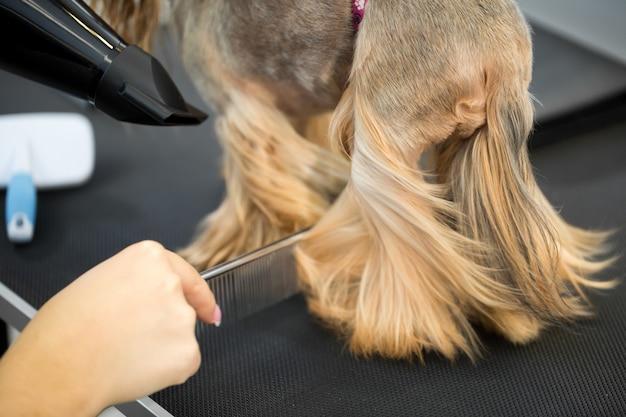 Груминг, мастер порезов и побрился, ухаживает за собакой