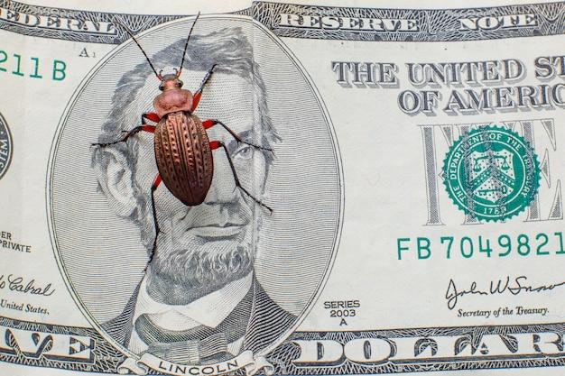 Жужелица на пятидолларовой купюре. денежный жук