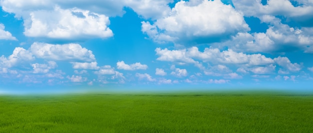 The ground and blue sky