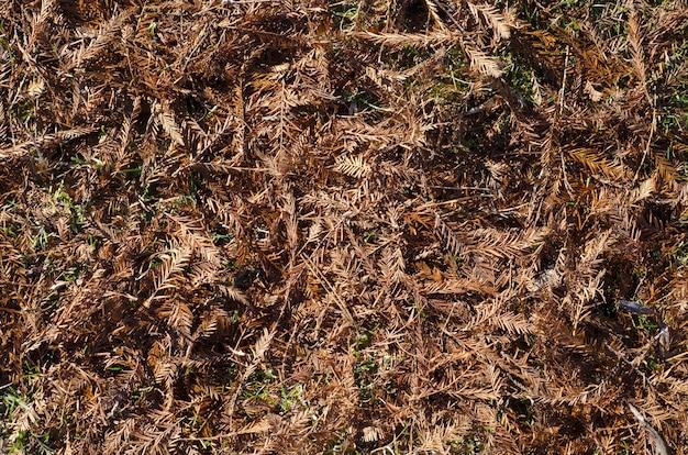 乾燥した松葉と葉で覆われた地面