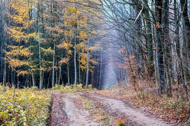 秋の森の郊外の地上道路