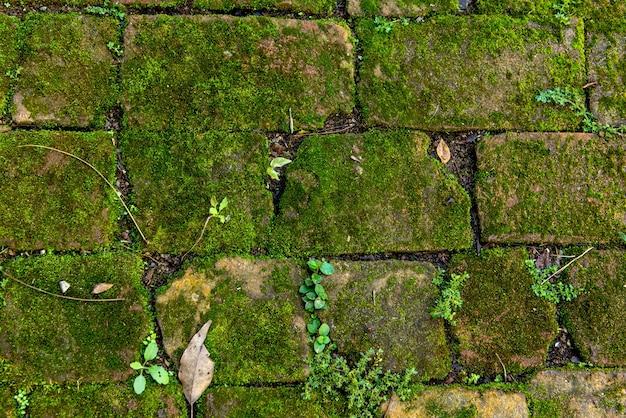 緑の苔の背景で地面。