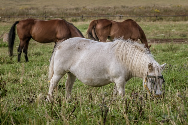 Group of beautiful horses grazing during daytime