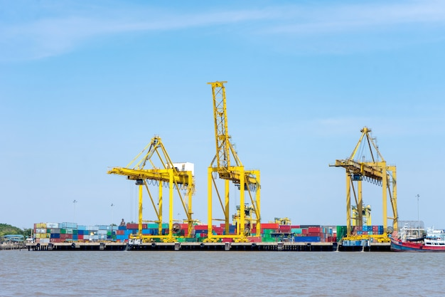 Group of big crane near the river
