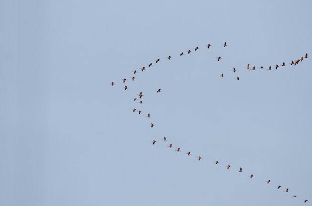 Group of birds flying in the blue sky