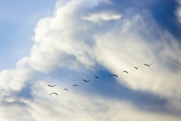 Group of brids isolated on sky