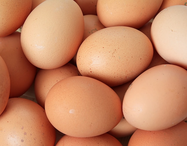 Group brown chicken egg