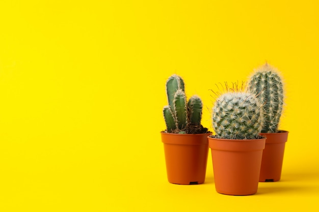 Group of cacti in pots on yellow surface