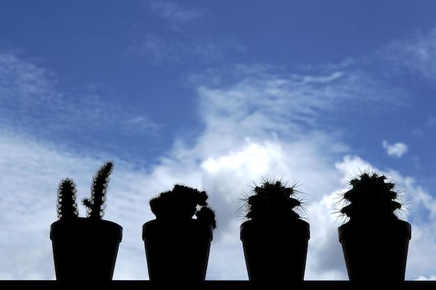 Group of cactus in backlight on blurred clouds in the blue sky background
