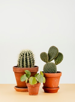 Group of cactus in flowerpots