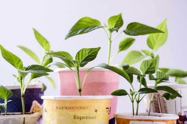 Group of cardboard disposable cups with plants