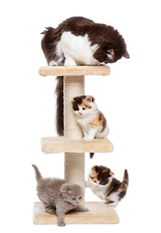 Group of cats playing on a cat tree isolated on white