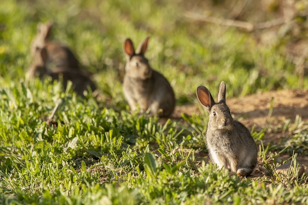 Group of cute bunnies in a green grassy field