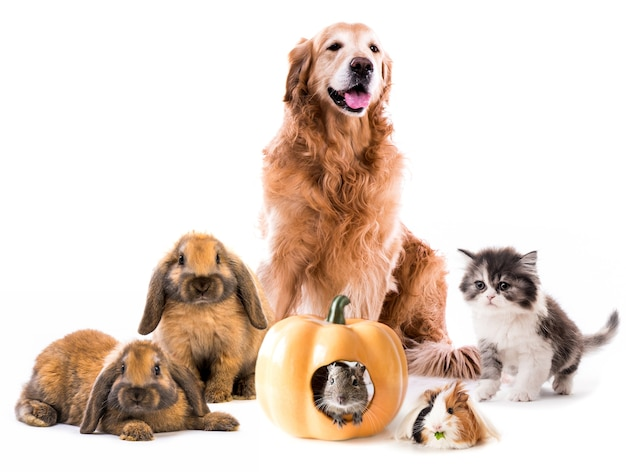 Group of cute fluffy pets isolated