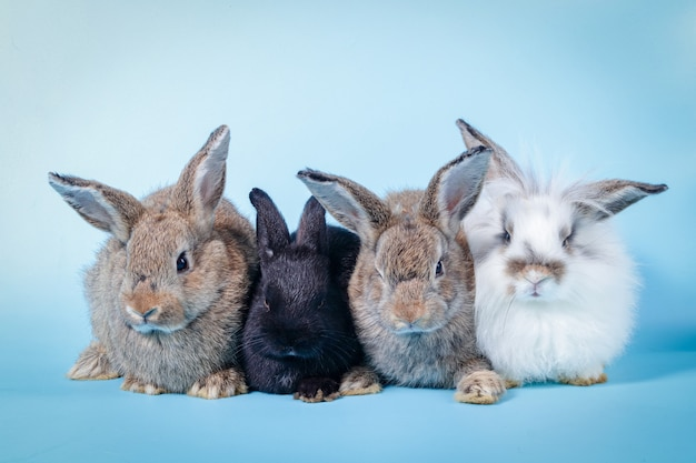 A group of cute little bunnies