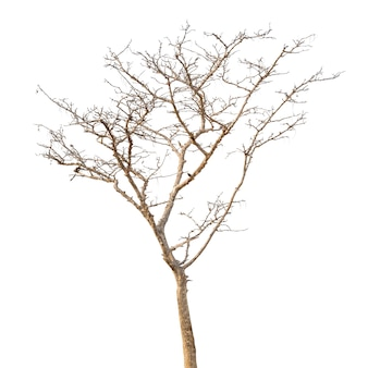 Group of dead tree isolated on white