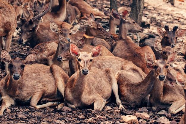 Group of deer in zoo, vintage image