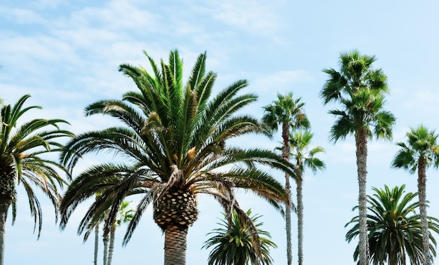 Group of different beautiful palm trees