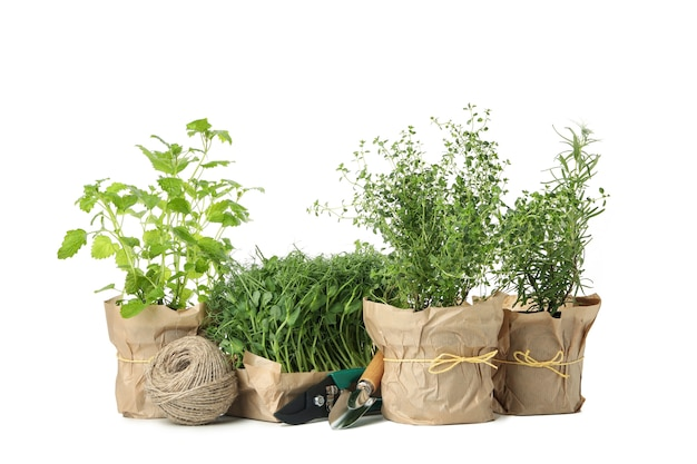 Group of different herbs isolated on white background