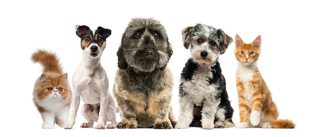 Group of dogs and cats in front of a white wall