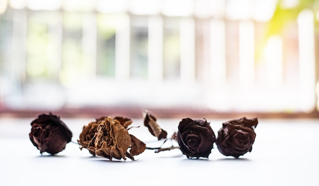 Group of dried rose put on background, blurry light design background
