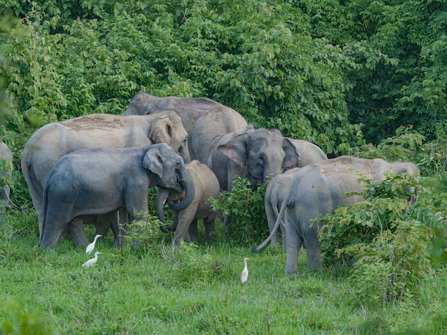 Group of elephants in the forest.