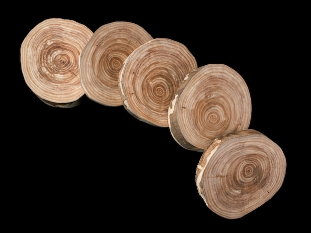 A group of five saw cuts of  birch