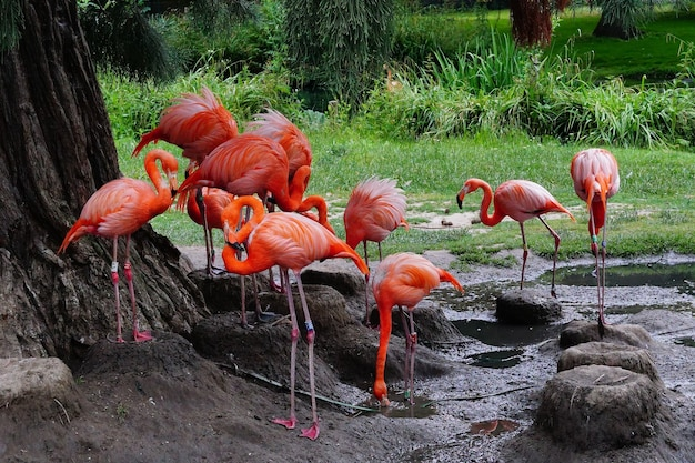 Group of flamingoes standing on a muddy ground