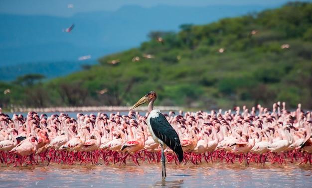 湖でフラミンゴをグループ化します。ケニア
