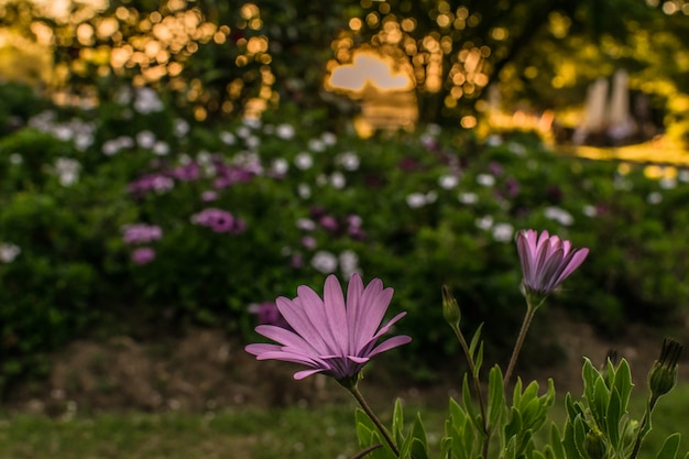 Group of flowers in the park or garden at sunset