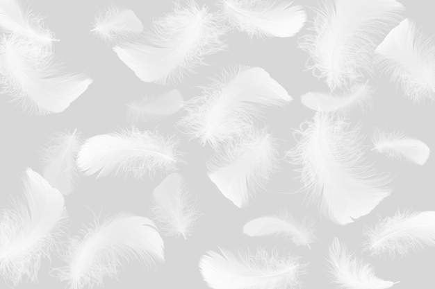 Group of fluffy a white feathers on gray background.
