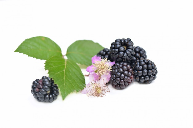Group of freshness blackberries with leaf and flower isolated