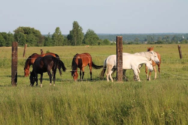 Group of horses on enclosure at the meadow pasture, standing side by side