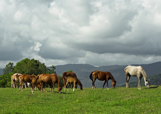 Group of horses and foals grazing on pasture at summer day