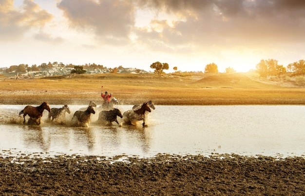 A group of horses running in the water