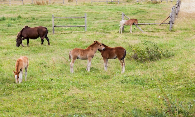 Group of little foals playing together and an adult horse in pasture, summer landscape