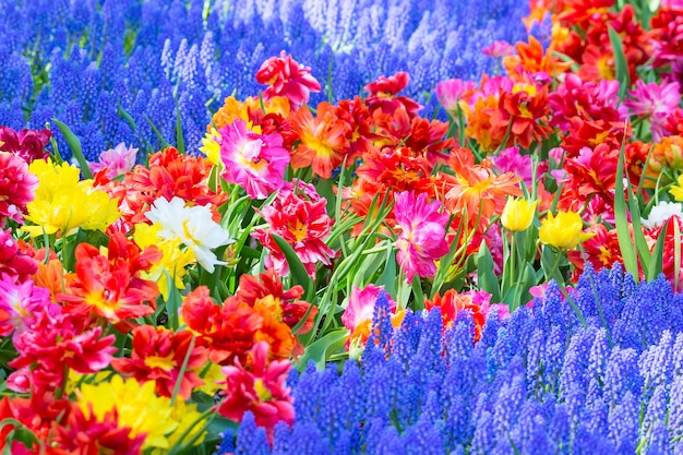 Group of lupines, tulips and other beautiful flowers growing on flowerbed