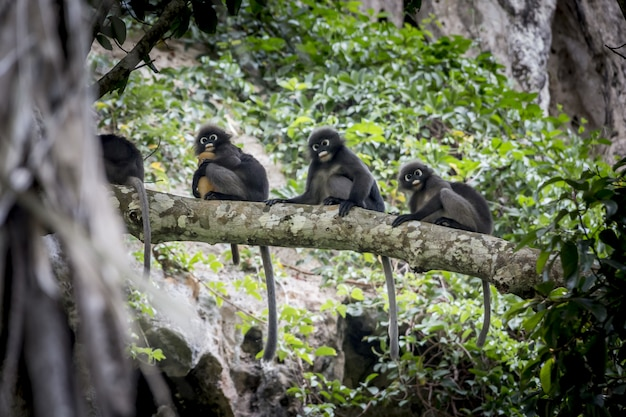 Group of monkeys sitting on tree