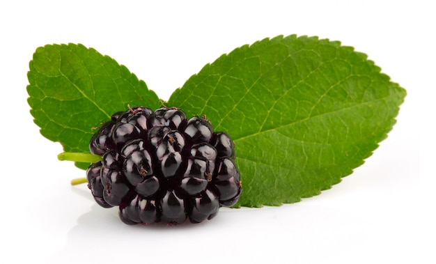 Group of mulberries with green leaves isolated